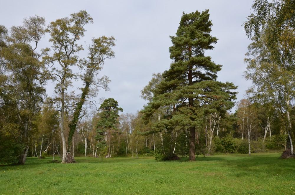Storms änge i Vamlingbo 2014