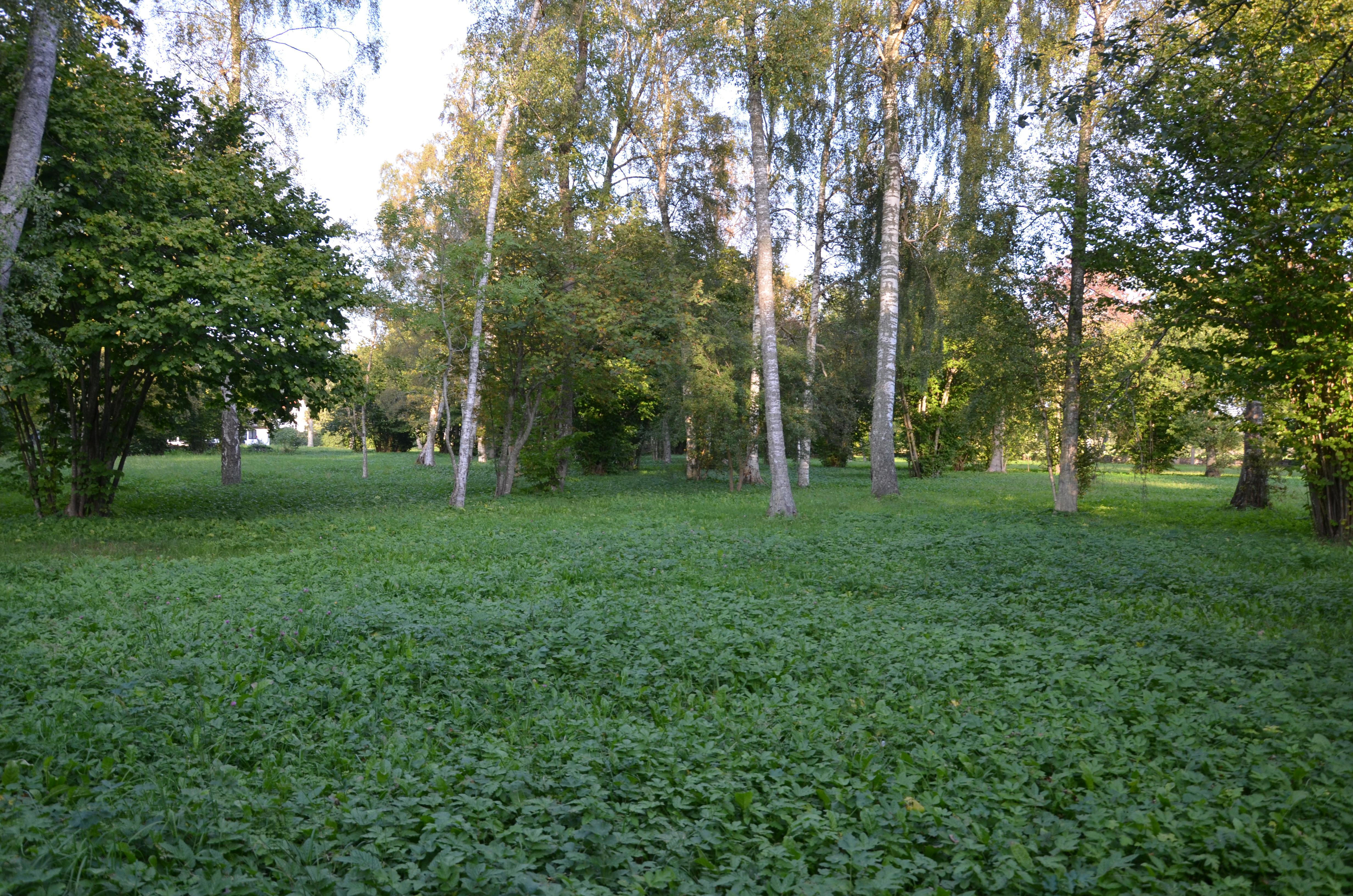Sigrajvs änge i Vamlingbo 2014