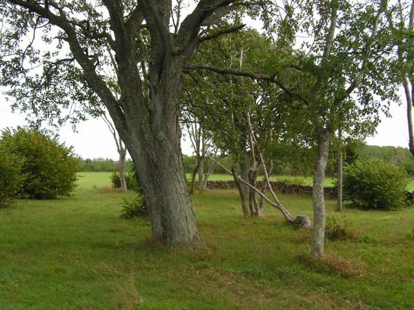 Lillänget i Vamlingbo 2012