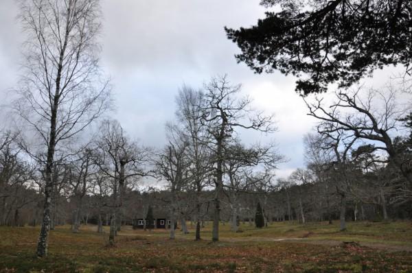 Fårö Gotska sandön – Kapellänget