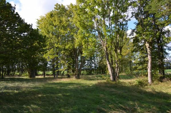Havdhem – Kälder änge