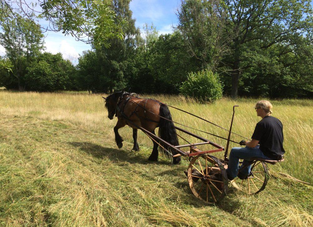 Eskelhem Valde änge - slåtter med häst 2016